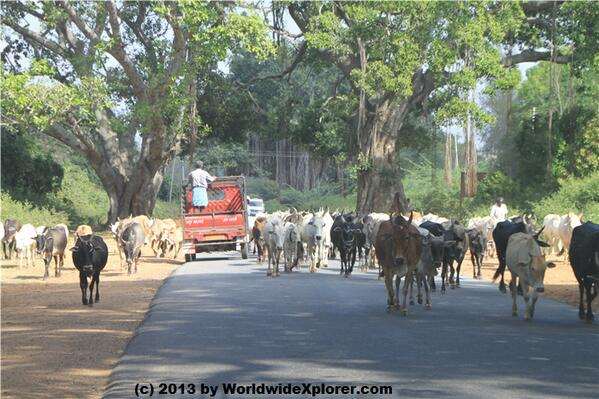 Thumbnail for Getting In, Out and Around India #travelindia