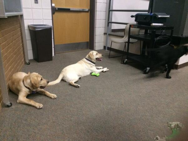 Who could resist these guys? @GuidingEyes is just one of the organizations available on campus. #JRLWeb http://t.co/ilK72mBbiZ