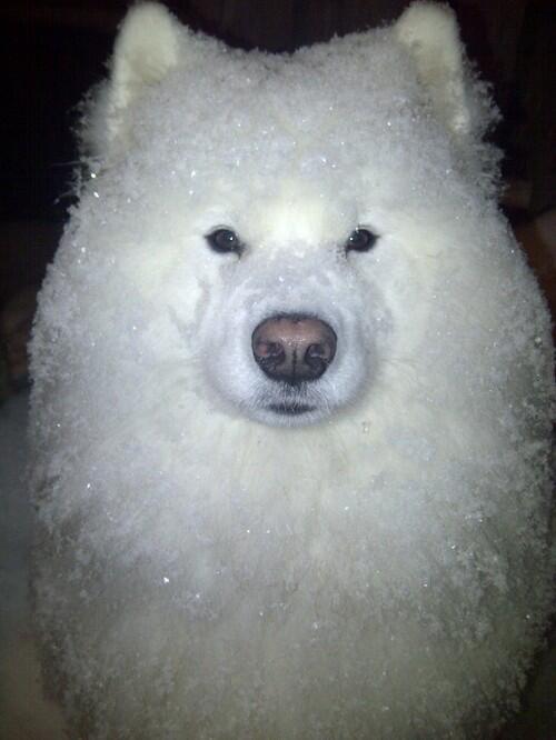 散歩に行ったら、かき氷みたいになってしまったでござる…。 http://t.co/cXz9beDrh1