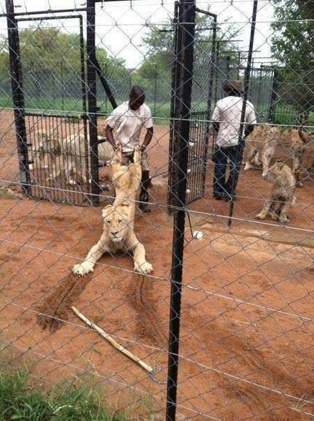 一方アフリカでは・・・ http://t.co/ugP0VWk1og