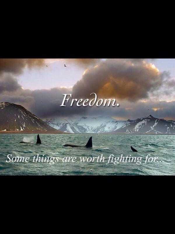 Say No To Captivity. Be The Voice For The Voiceless. http://t.co/wvYYFyXB6u