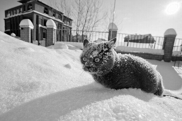東京西部在住の友人が送ってくれた画像。あまりの寒さに凍る猫ちゃん。ううっ。 http://t.co/CFly1nOICQ