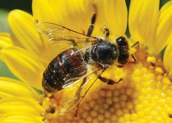 MEDIA RELEASE #Senate must heed evidence on #bee killing #pesticides... http://t.co/sMAuMiZhr7 #CdnPoli #ONpoli #Bees http://t.co/tX8Vy7FECs