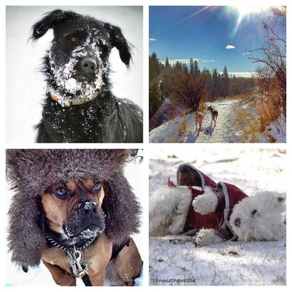 You'll ooh and aaaah over these incredible dogs in snow photos on our site! http://t.co/ZN0vrDgStC http://t.co/TZXRSBxaA5