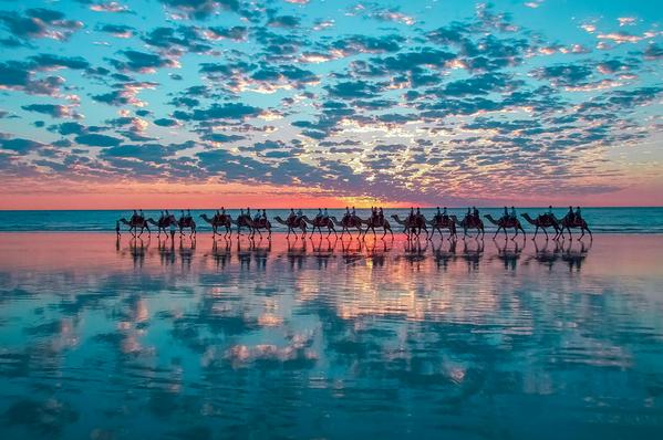 Amazing! RT @500px: Camels on Australian beach! Photo: http://t.co/k595a5LSKM by Shahar Keren #travel #sunset http://t.co/UIDcJOTHlO