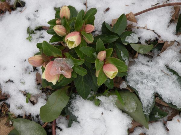 "Amen! ""@FrankFerragine: Good bye January 2014....please be gentle February!! #springthoughts http://t.co/NM1OZA5fej"""