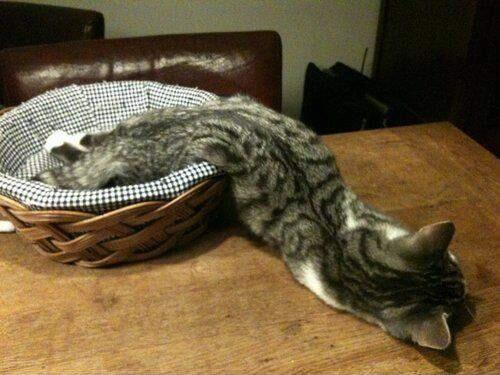 猫がの、のびた!? pic.twitter.com/1Zbr70gaYB