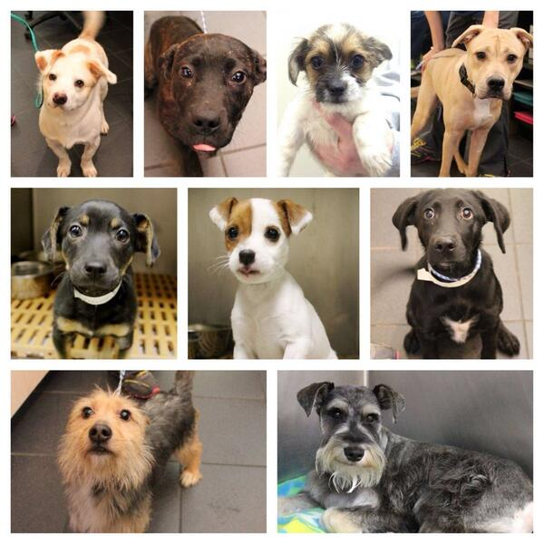 Thank you Nashville @nashvillehumane #Unleashed #SOLDOUT for 4th yr in row. Now, let's find homes for these babies! http://t.co/Gl2qMX4aoo