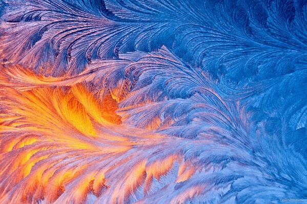 стрептокарпус морозные узоры фото