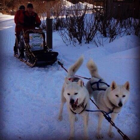 The only thing cooler than a beer delivery drone is beer delivering Siberian huskies! #Vermont #thelongthaw http://t.co/d70oAPRe4w