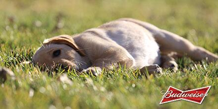 Play until you can't play anymore. Then nap. #BestBuds
