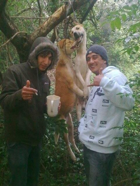 悲惨な目に合わせられたこの動物が、奴らから畜産動物や毛皮動物や実験動物や産業動物や害獣と呼ばれていて、奴らがこれを仕事として金を稼いでいれば、何も言わないってことですよ? http://t.co/LUJrfhQdwk