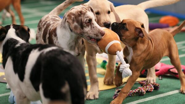 Forget about the #SuperBowl & watch this instead! @XFINITY_TV: Meet puppies of #PuppyBowl X! http://t.co/RzAmYsCK3e http://t.co/Ff3Uy7EFYE""