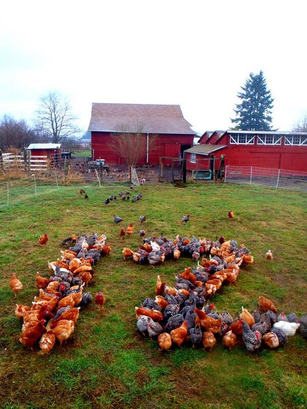 #12thHens!  RT @soltoseedfarm: Check out what the chickens at Early Bird Eggs did: #SB48 #GoHawks http://t.co/6fs0aUtQJF