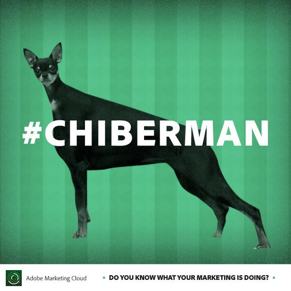 @audi. Did you try a Doberman body and a Chihuahua head? #CreepyCute #Chiberman http://t.co/DMMNsl6R68