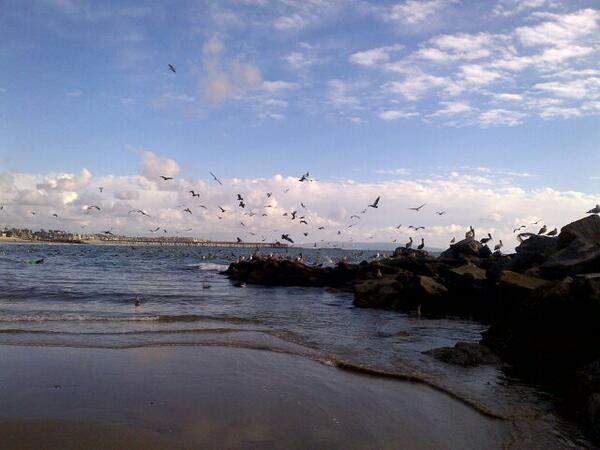 There must be 300 pelicans at the Venice breakwater right now #mydayinla http://t.co/mcLhewFjwf