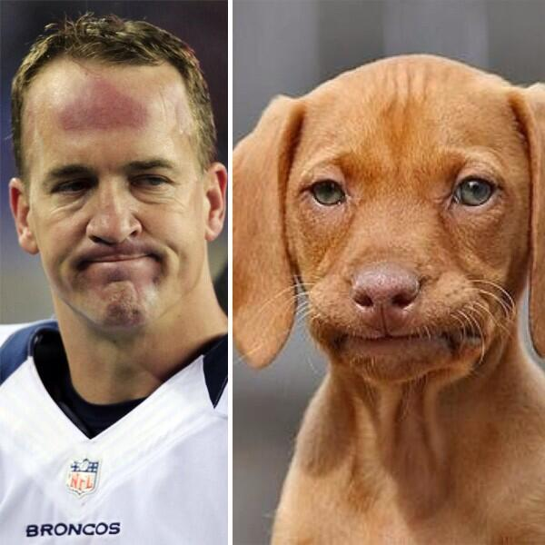 barkbox on twitter interception peyton manning ruhroh