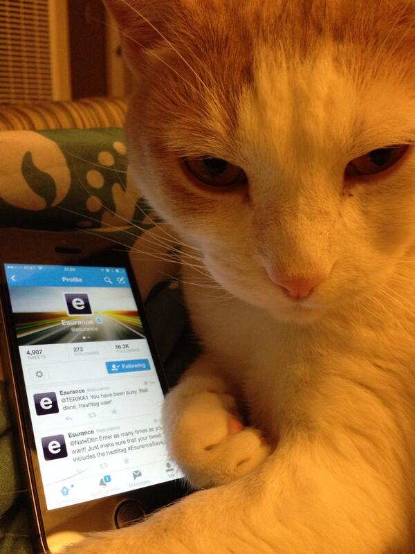 Even my cat is tweeting to @esurance #EsuranceSave30 #meow http://t.co/DD17Bp9Bzw