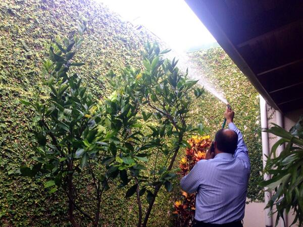 Mientras atiende llamadas de los medios @luisguillermosr le echa agua a sus matas http://t.co/g3mcFFmsaj
