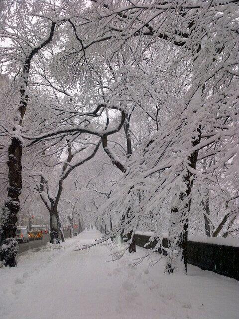 GORGEOUS day at central park sheathed w fairy snow ! http://t.co/L8FvZ8UhaL