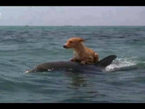 Un hombre tiró a su Perro en el mar a 1 km de la playa.. Con la finalidad de q muriera Ahogado.. Y Esto pasó.. http://t.co/SBH5Rp4T6e