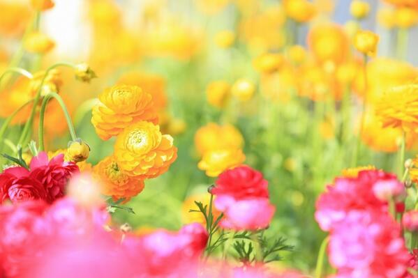 立春*\(^o^)/*                 温室の中だけはそう思える(^^;; http://t.co/RaNfUIl6Mz