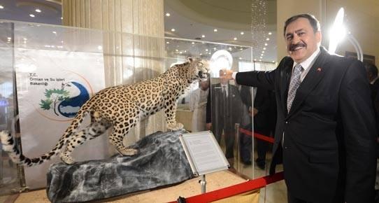 Bu acılı gündemde kaynamasın! Anadolu'nun belkide son leoparı öldürüldü.Gururla sergileyen orman bakanı Veysel Eroğlu http://t.co/AlOlMRpXLI