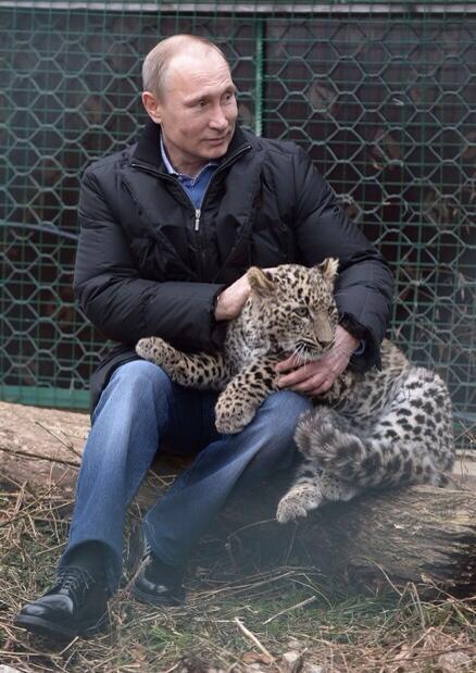 さすがやな!…プーチン大統領、IOC幹部と「ヒョウ触れあいツアー」 ブチ切れて報道陣を襲ったヒョウを仔猫のようにあやしつける http://t.co/MQInsbVMvT http://t.co/tVHVAfVTOr