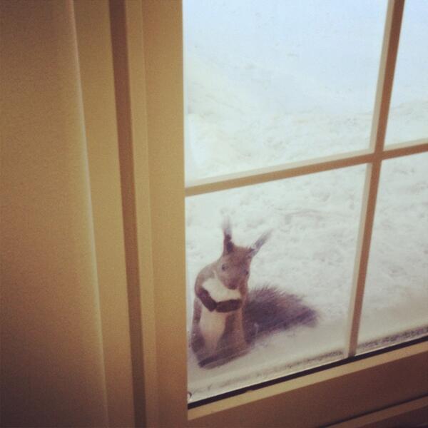 朝からお菓子を焼いてると、匂いに誘われてリスたちがやって来ます。窓をトントンします。(*°ω°)ノその焼き立てクッキーを下さい。 pic.twitter.com/MqEwE7CTpe