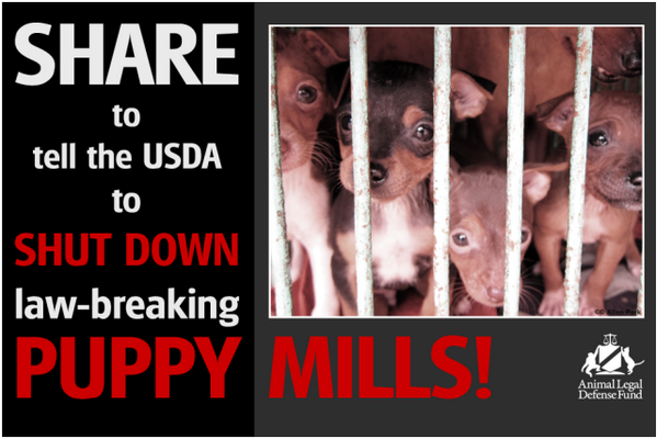 Our partner @ALDF wants the USDA to shut down law-breaking puppy mills. Join the campaign: http://t.co/hzGbEX7g8K http://t.co/rHSFXpE2rq