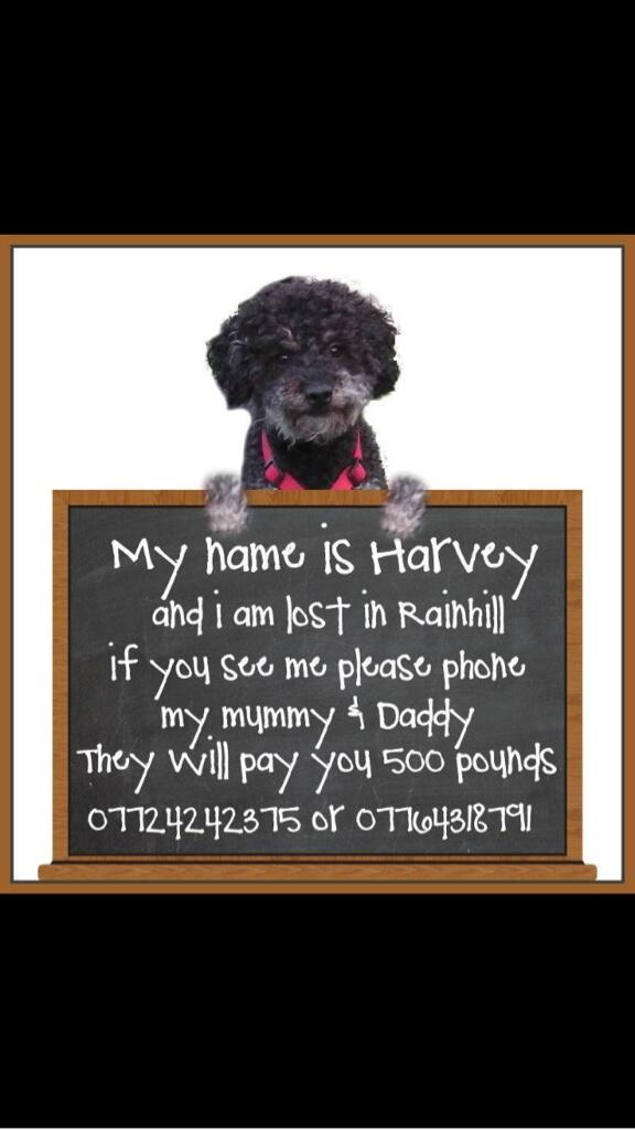 Calling all dog lovers across the North West please help #FindHarvey if you can @FindHarvey1 http://t.co/C9jUgi1i4I
