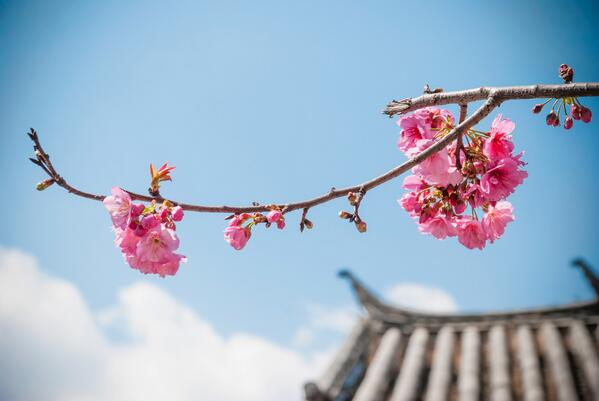 Spring is coming! #Stockholm to #Beijing from only SEK 4494:- book your flight on airchina.se #china #spring #Peking http://t.co/edpUq6wJae