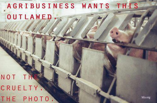 Idaho #AgGag Law Would Make It Illegal to Photograph Factory Farm Cruelty http://t.co/IivYZIp5hi via @WillPotter http://t.co/Y3hkRpXkxW
