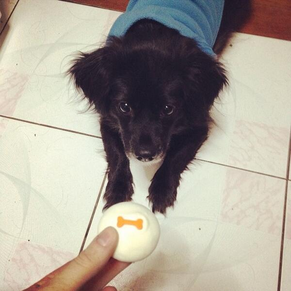 @PEOPLEPets Molly reaaaalllly wants the cupcake. #cutepic http://t.co/avfqXlC9gV