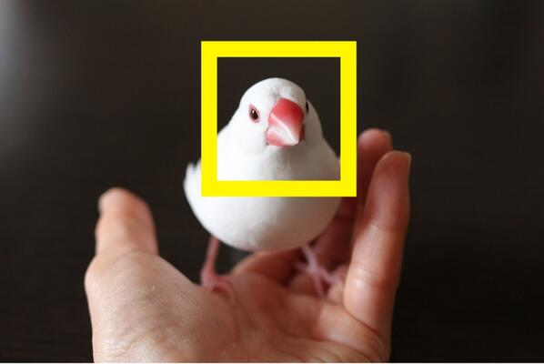 去年から研究している文鳥の顔認識。白文鳥ならだいたいいけるようになった。 http://t.co/zmJdFcLMFb