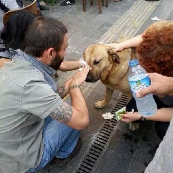 """POR FAVOR! """"@igor_fuentes: Los Animales se ven igual de perjudicados por Gas lacrimogeno, AYUDALOS! http://t.co/Dut9BTUccX"""" no usar vinagre"""