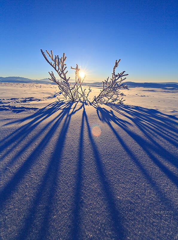 ツンドラ帯で見つけた植物は凍りついていました。氷原の中にぽつんと、自然の宝飾品のように輝き見事でした。 pic.twitter.com/GFCUdDNvHH