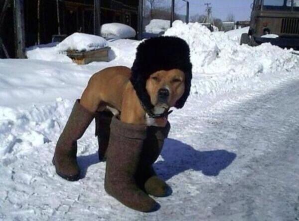 雪かきだワン。 http://t.co/4R94yqFPkJ