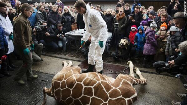 Outrageous! We have a duty to save animals. Zoo kills healthy giraffe, saying it has a duty. http://t.co/BMsUjhRO1f http://t.co/4orjPdMrMv