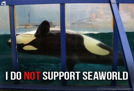#Blackfish is airing on @CNN tonight at 9 & 11pm ET. Please RT & spread the word! #SeaWorld http://t.co/frMNOXzVoG