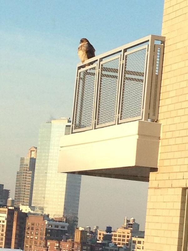 Good morning you great big washington square hawk! http://t.co/4Cc9ip52X2