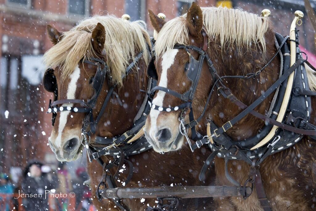 트위터 / Jensen_Photo: #steamboat Winter Carnival ...