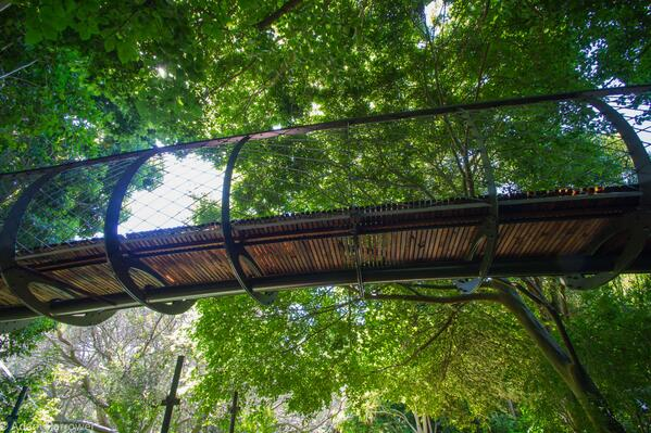 Gallery: The Kirstenbosch Treetop Walkway is almost complete. See the photos here > http://t.co/j9rQYDduPu http://t.co/PpdMG6mDMY