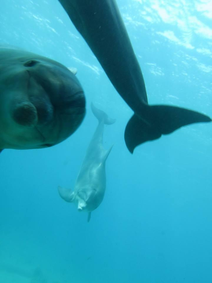 RT @OMGFacts: A dolphin photobombing a picture of another dolphin http://t.co/mX0F4wNj8g