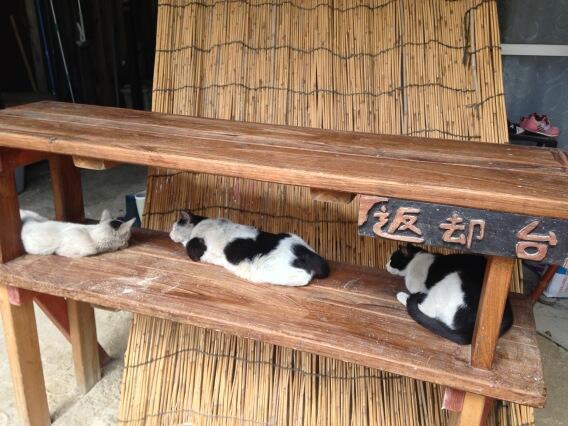 おそば屋さんで返却される猫たちw pic.twitter.com/wFL8divtgo