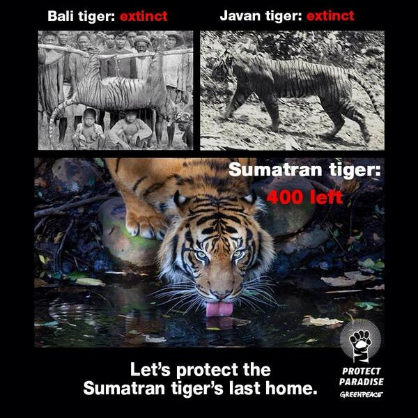 #SayNoToPalmOil: Their homes are being destroyed so that Palm Oil can be produced. 400 left. http://t.co/swPEBDSgBY