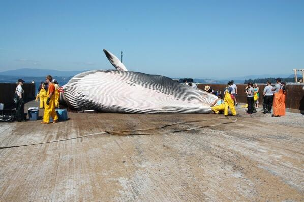 .@Greenpeace @ElizabethMay & others shocked endangered #whalemeat shipped thru Canada http://t.co/cC3ItU2oGx #cdnpoli http://t.co/WdSqywaPkM