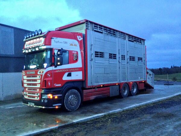 David Clarke On Twitter DMcGeough Livestock Transport Delivering A Load Of Bulling Heifers Today To The Farm Tco DXqoD97ejL