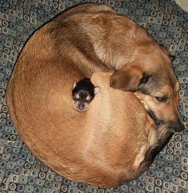 That's all for tonight peeps! Sam and the team back tomorrow. Keep as warm as this pup! http://t.co/HNiSA9qOIA