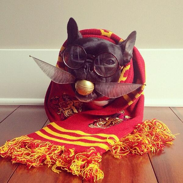 The best picture of a dog in a Harry Potter costume you'll see all day http://t.co/NxAoxRdY3V